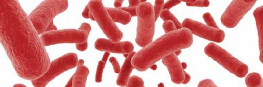 warm water legionella